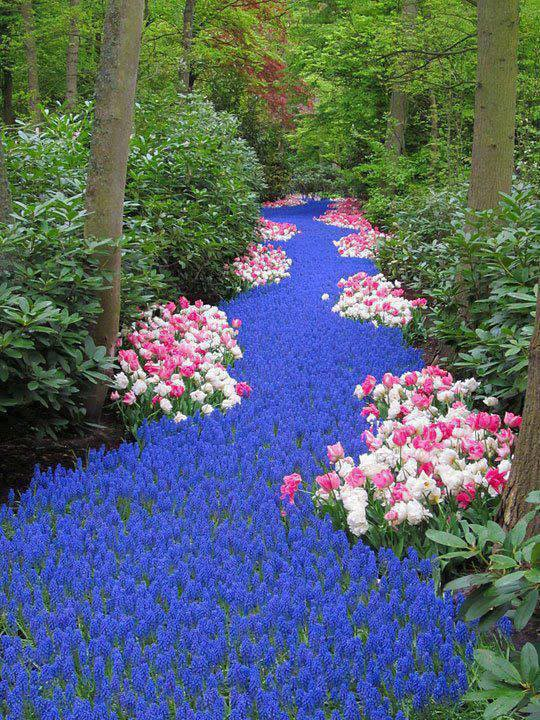Holland River of Flowers Keukenhof
